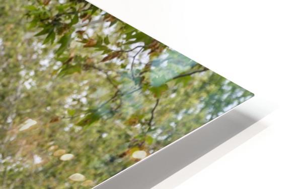 IMG_1465 HD Sublimation Metal print