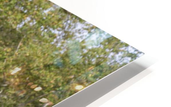 IMG_1466 HD Sublimation Metal print