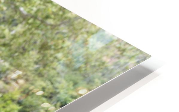 IMG_1614 HD Sublimation Metal print