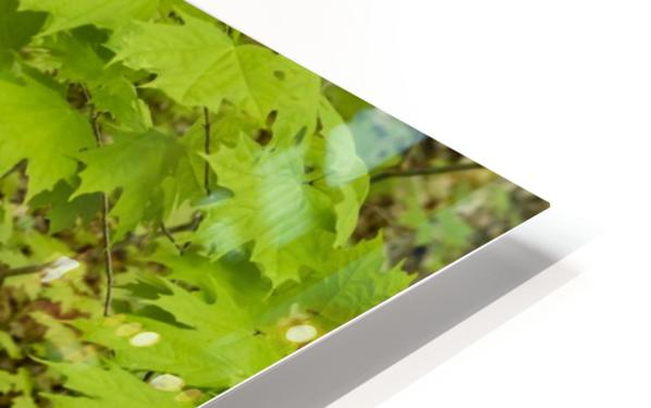 Trillium Woods 10 HD Sublimation Metal print