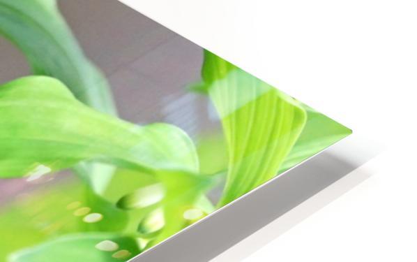 Shades Of Green HD Sublimation Metal print