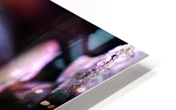 DSC03143 HD Sublimation Metal print