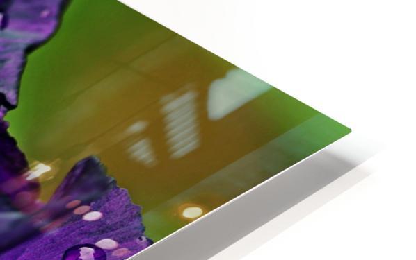 Purple With White Splash Iris HD Sublimation Metal print