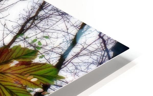 Green and Colourful Nature Scene HD Sublimation Metal print