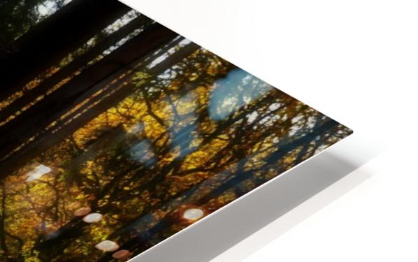 Fantasy Forest 04 HD Sublimation Metal print