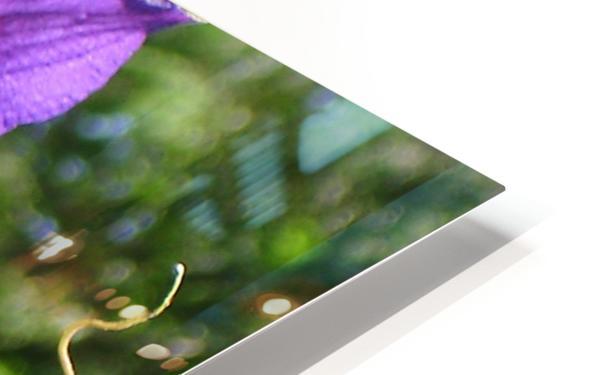 Flower Study -9 HD Sublimation Metal print