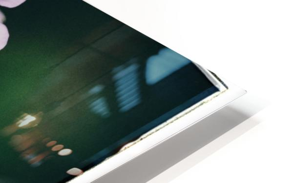 Phlox in Bloom HD Sublimation Metal print