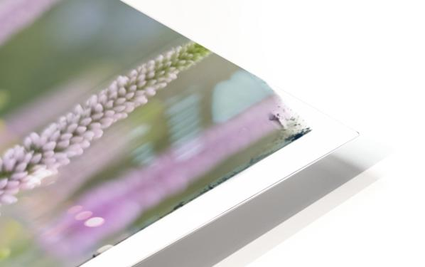 Cone Flowers HD Sublimation Metal print