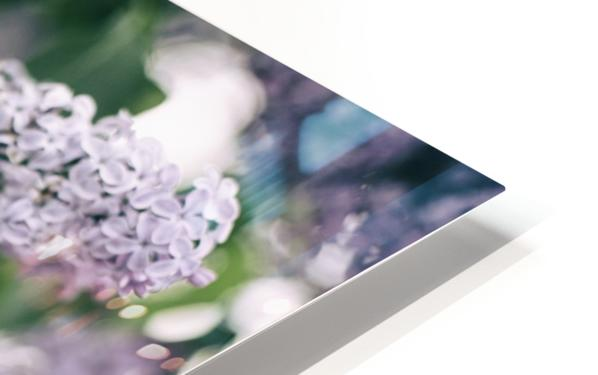 Lilacs in Spring HD Sublimation Metal print