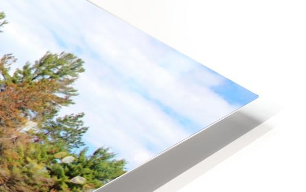 The Pine Tree I HD Sublimation Metal print