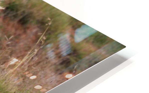 Brown Lion Male 9027 HD Sublimation Metal print