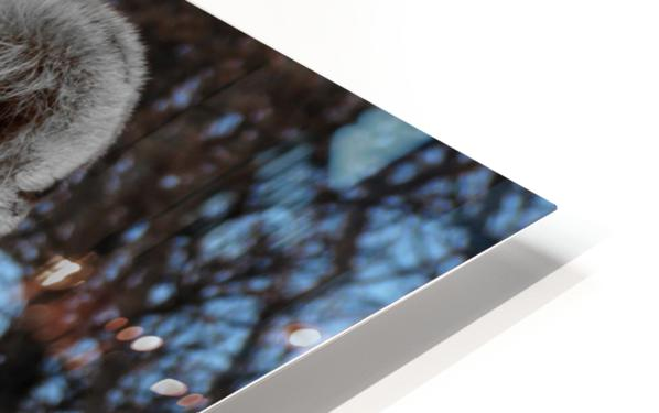 White Lion Female 1030593 HD Sublimation Metal print