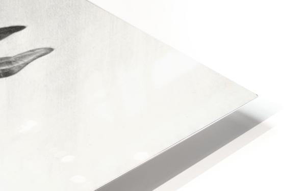 ARABIAN BEAUTY HD Sublimation Metal print