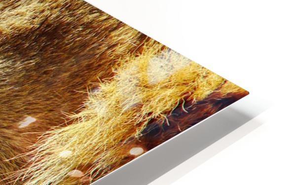 Lion Male HD Sublimation Metal print