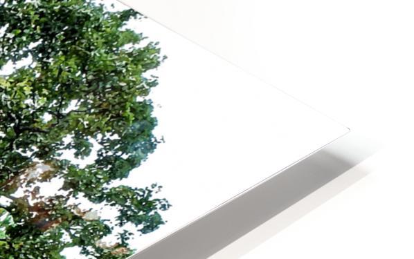 Larrys Tree HD Sublimation Metal print