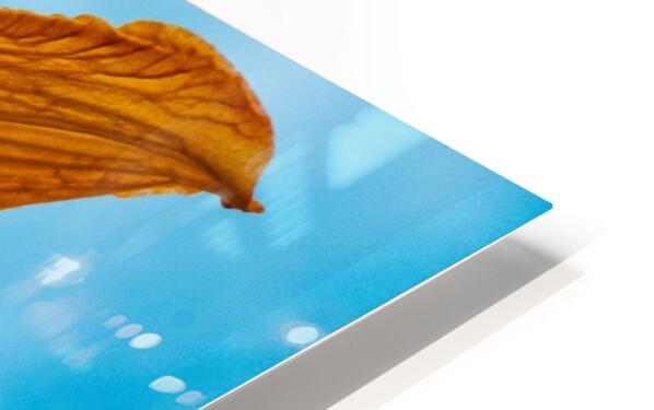 Orange Iris 3 HD Sublimation Metal print