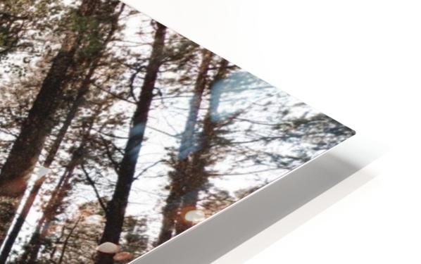 See the Sun HD Sublimation Metal print