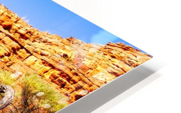 Twisted Tree - Kings Canyon HD Sublimation Metal print
