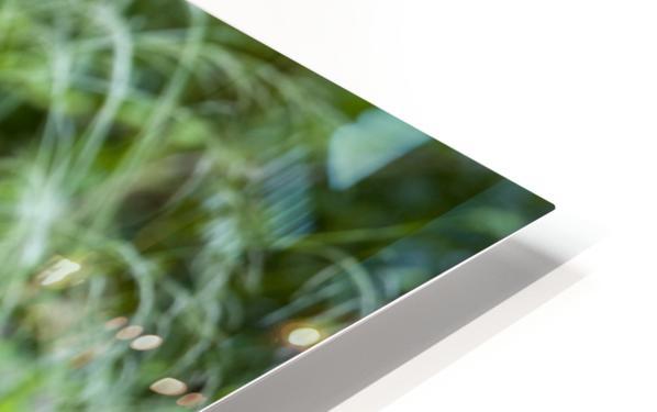 Simba HD Sublimation Metal print