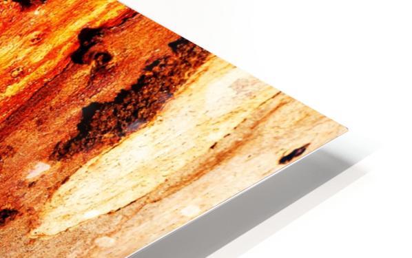 Murray Gum Tree Bark 2 HD Sublimation Metal print