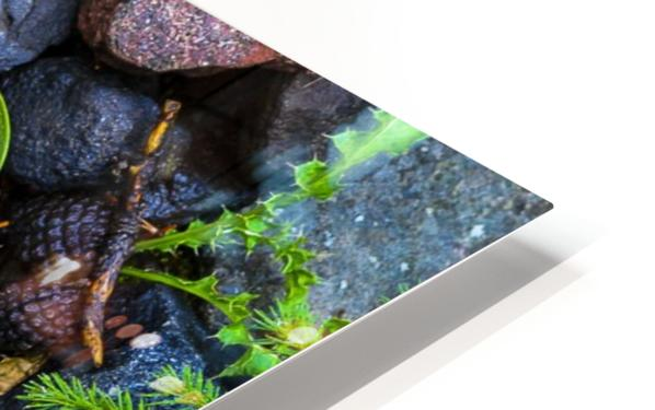 Forest floor HD Sublimation Metal print