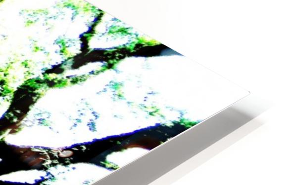Trees HD Sublimation Metal print