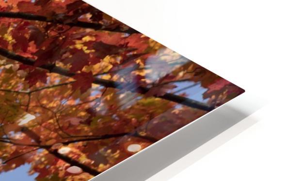 Autumn tree HD Sublimation Metal print