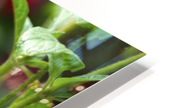 Butterfly HD Sublimation Metal print