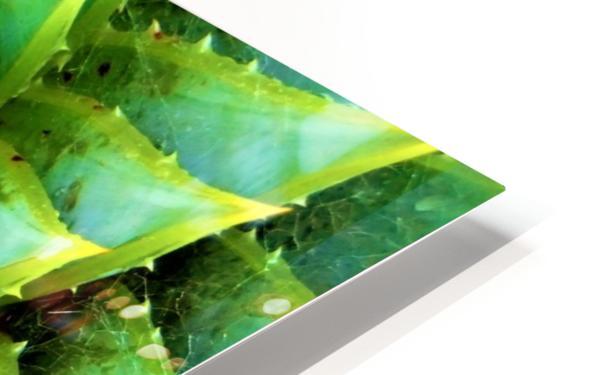 Cactus Spiral HD Sublimation Metal print