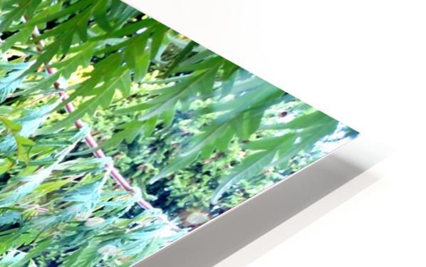 Rasta Leaves HD Sublimation Metal print