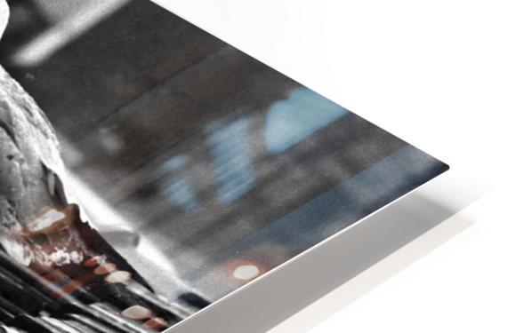 Gull HD Sublimation Metal print