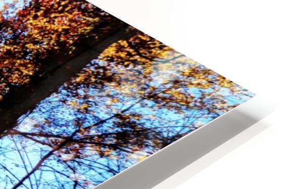 Golden Autumn HD Sublimation Metal print