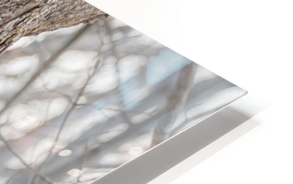 Peekaboo HD Sublimation Metal print