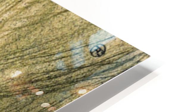 Cecy Loftus by Toulouse-Lautrec HD Sublimation Metal print