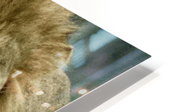 Extreme close up Lion HD Sublimation Metal print