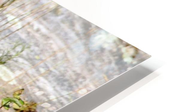 Curiousity HD Sublimation Metal print