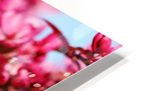 Crabapple Pink HD Sublimation Metal print