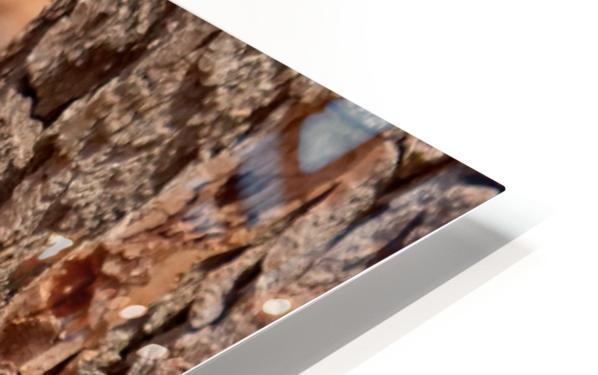 Birds HD Sublimation Metal print