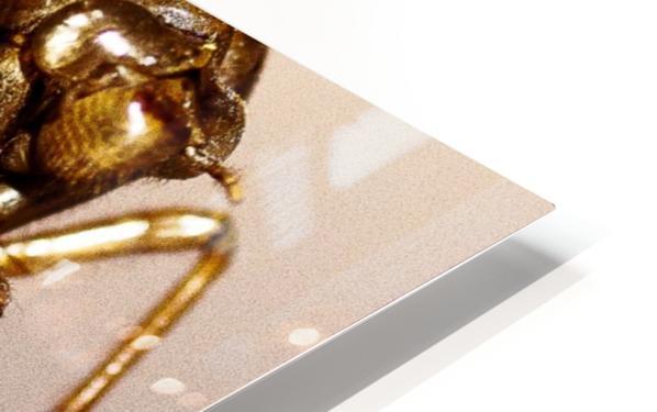 Golden Molt HD Sublimation Metal print