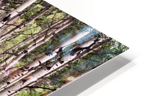 Aspens In Banff National Park at Muleshoe HD Sublimation Metal print