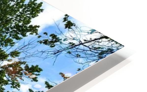 FB_IMG_1551063469653 HD Sublimation Metal print
