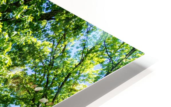 Tree Than Owns Itself   Athens GA 06567 HD Sublimation Metal print