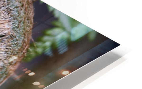 Fern unfolding april 2020 HD Sublimation Metal print