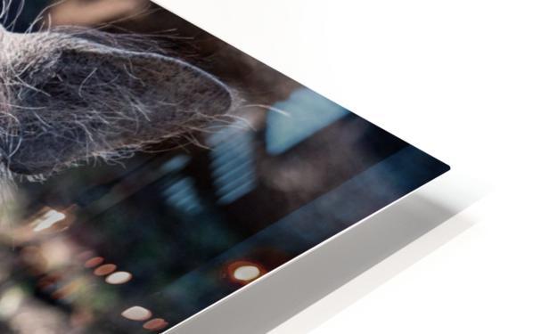 Warthog Close Up HD Sublimation Metal print