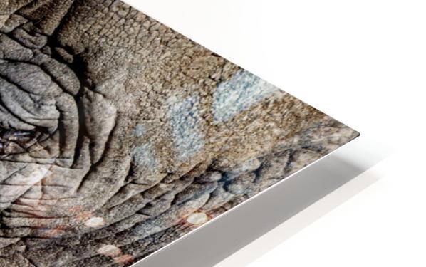 Elephant Close Up Impression de sublimation métal HD