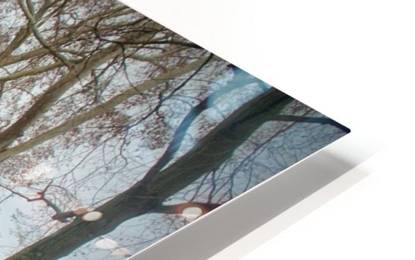 Medicis 2   1 HD Sublimation Metal print