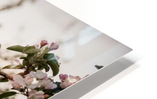 Fleurs de pommes Impression de sublimation métal HD