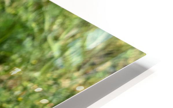 Poppy HD Sublimation Metal print