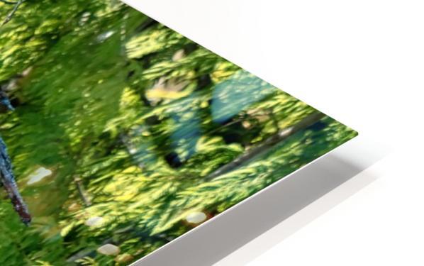 Eagle Tree HD Sublimation Metal print