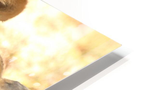 AdriaanPrinsloo 6659 HD Sublimation Metal print